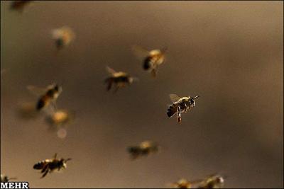 مسیر یابی پیچیده بوسیله مغز زنبورها