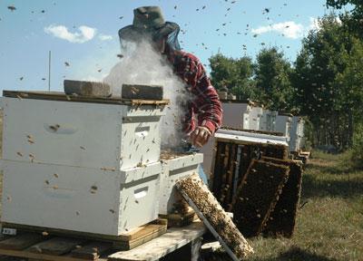 مهمترین کار زنبوردار در اسفندماه