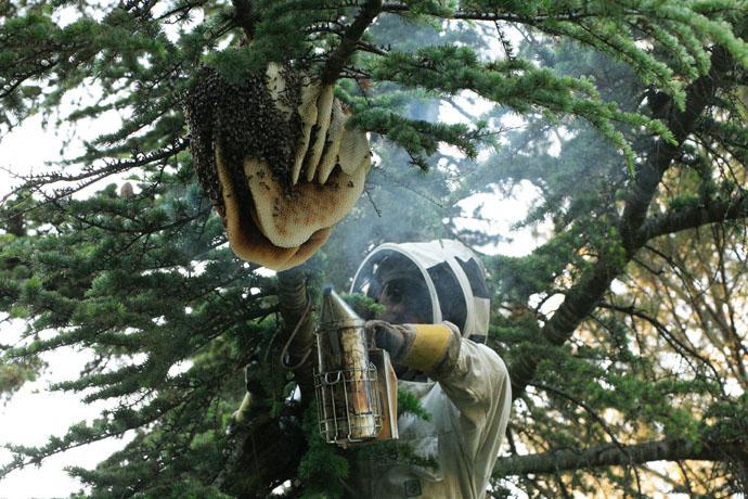 عسل طبیعی در جنگل