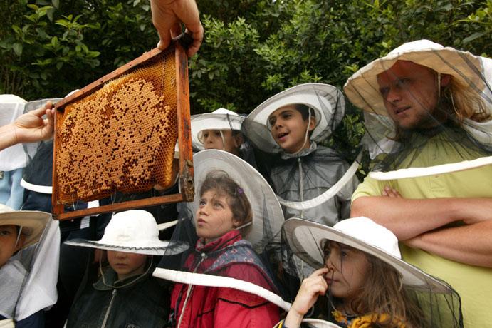 یادگیری زنبورداری