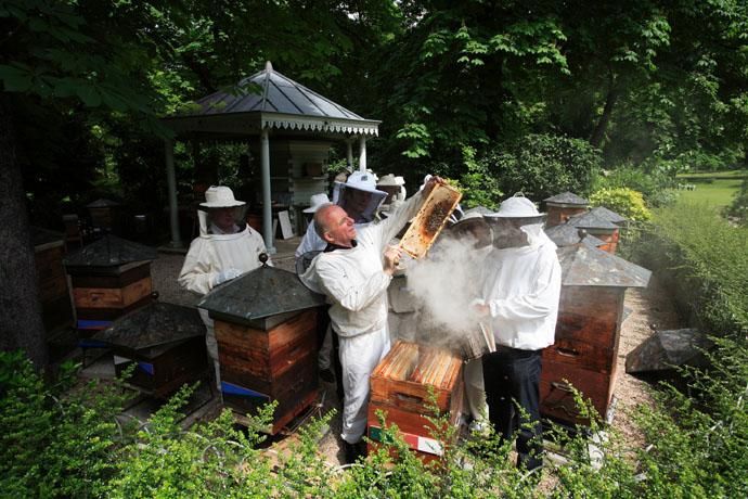 آموزش پرورش کندوی عسل