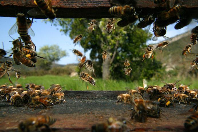 تصویر کندوی زنبور عسل