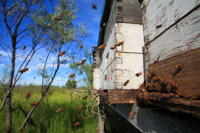 عکس زنبور