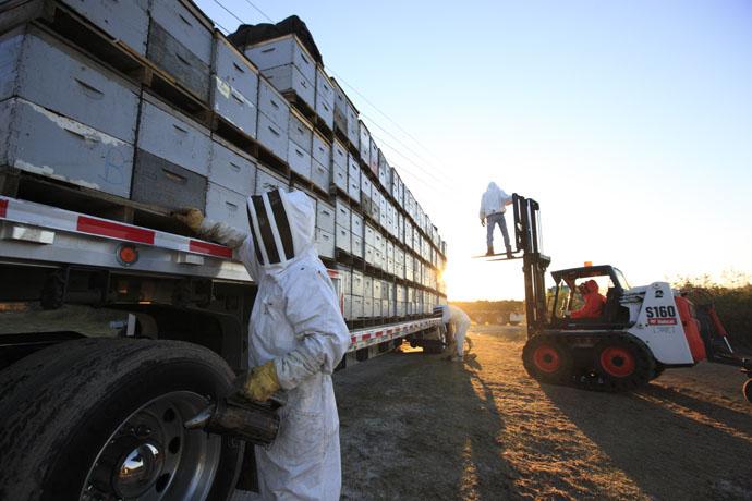 تولید عسل در آمریکا