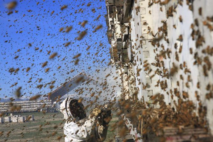 زنبورداری در آمریکا