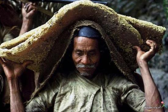عسل خالص وحشی در نپال