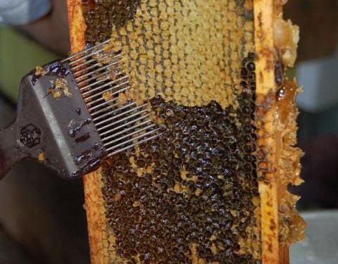 کاردک مخصوص تولید عسل و زنبورداری