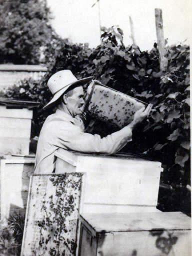 تاریخچه زنبورداری - عکس های قدیمی