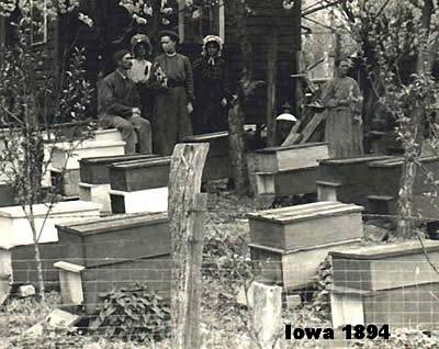 عکس قدیمی زنبورداری