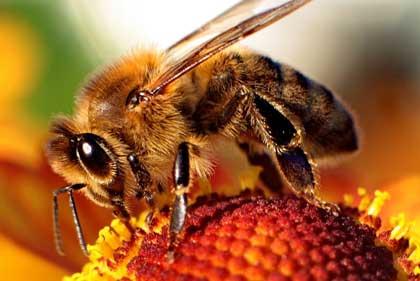 معرفی کارهای زنبوردار در فروردین ماه