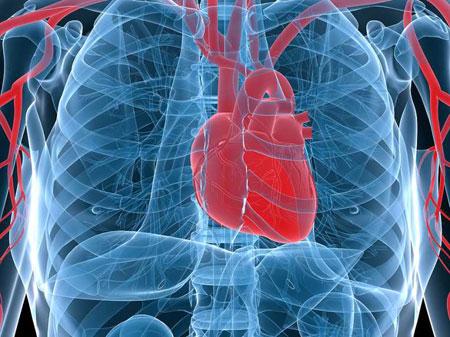 درمان بیماری کلیوی و قلبی با عسل