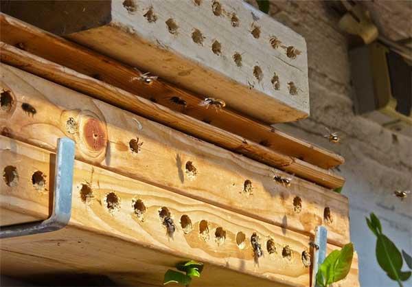 هتل مخصوص زنبور