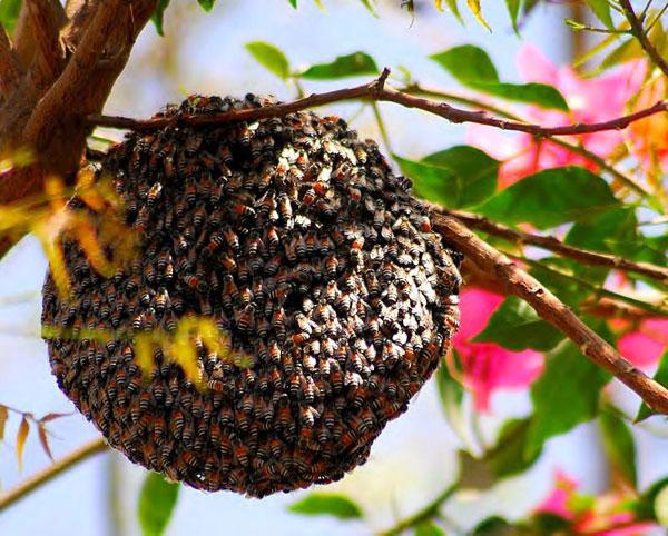 مجموعه زنبور عسل