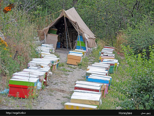زنبورداری، کاری سخت و زیان آور