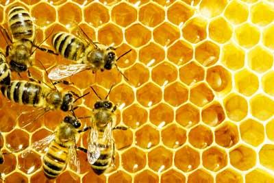برخورد جدی با عسل فروشی های تقلبی