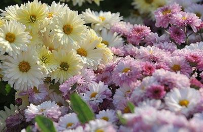 شیره گلها چگونه به عسل تبدیل می شود