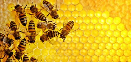 تاثیر آنتی اکسیدان های موجود در عسل