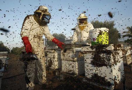 معرفی کارهای زنبوردار در اردیبهشت ماه