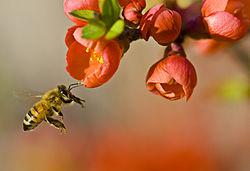 پیشنهاد ایجاد کلینیکهای عسل درمانی در اردبیل