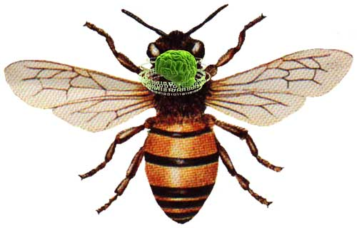 زنبورهای سحر خیز باهوشتر از زنبورهای دیگر هستند