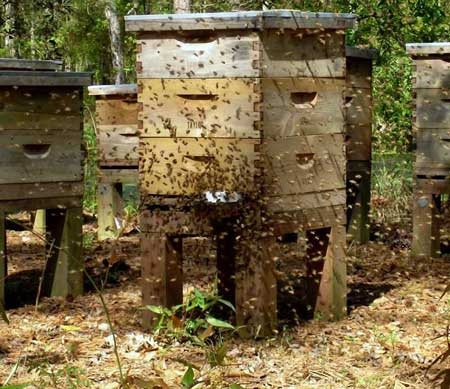 اهمیت استفاده از چهارپایه های زیر کندوی زنبور عسل