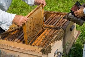 اقدامات قبل از تبدیل کندوی عسل بومی به مدرن