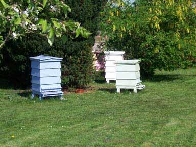 نحوه نگهداری عسل در حجم های زیاد یا کم