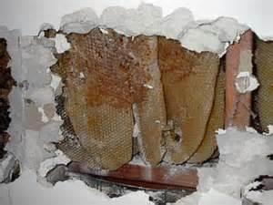 کندوی عسل طبیعی در خانه