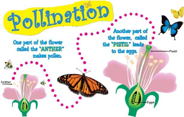شکل های مختلف گرده افشانی گیاهان