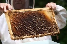 رعایت نشدن وزن استاندارد شانه عسل در اردبیل