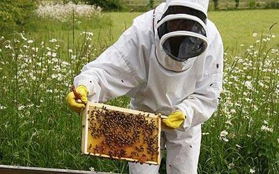 زنبوردار نمونه اردبیلی در هر کندو 43 کیلو عسل تولید کرد