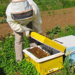 زنبورداری برای تازه کارها